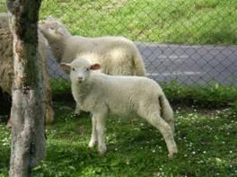 Chov domácich zvierat - základ živobytia c6f277254d2